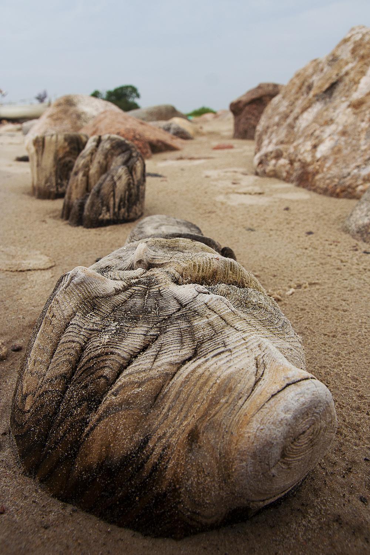 Wooden Piles Via @Atisgailis