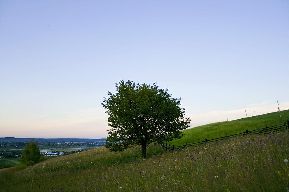 Tree On A Hill Via @Atisgailis