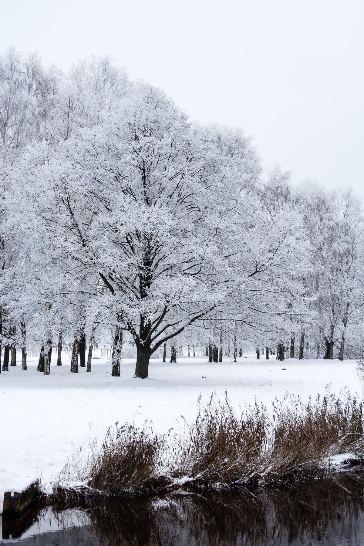 Park In Winter Via @Atisgailis