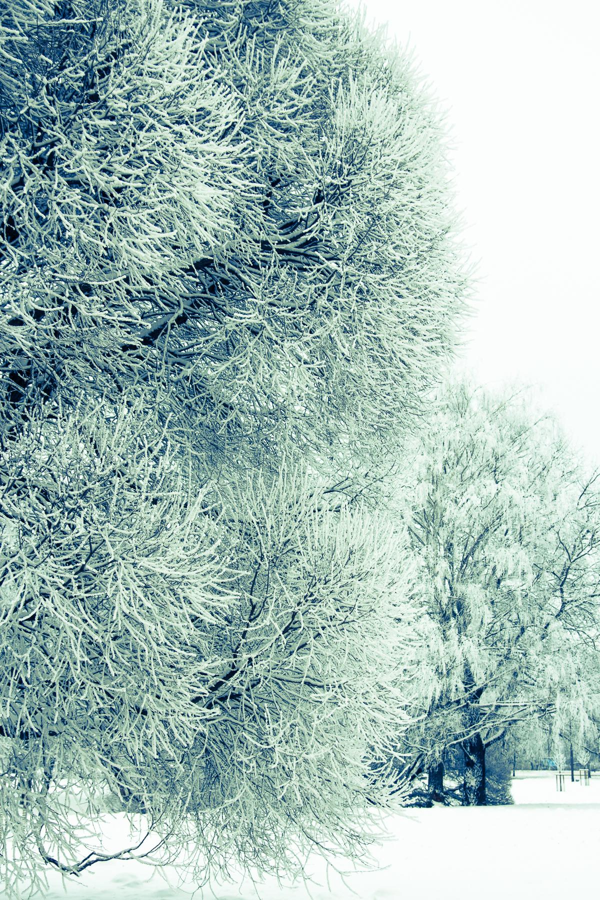 Winter Via @Atisgailis