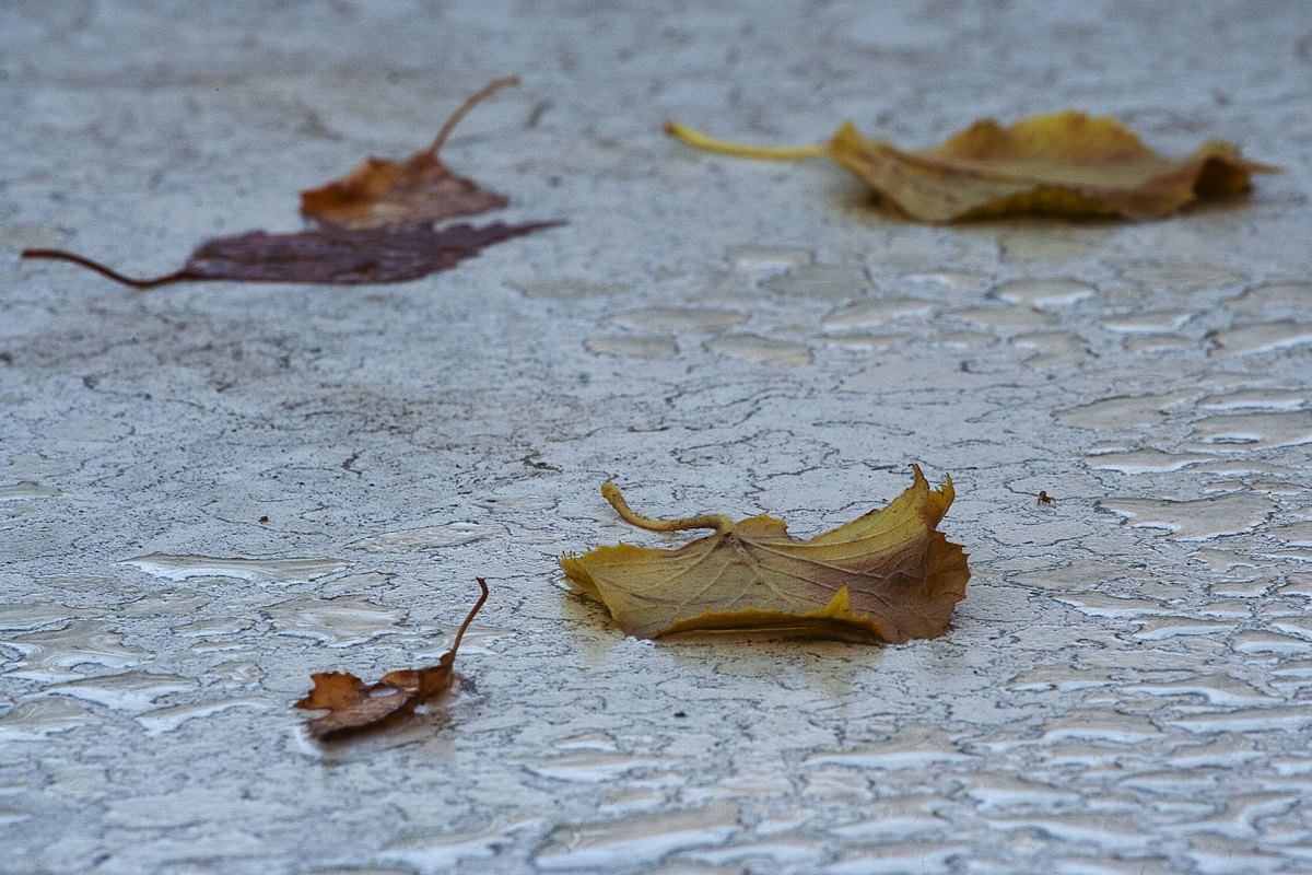 Autumn Leaves In Rain Via @Atisgailis