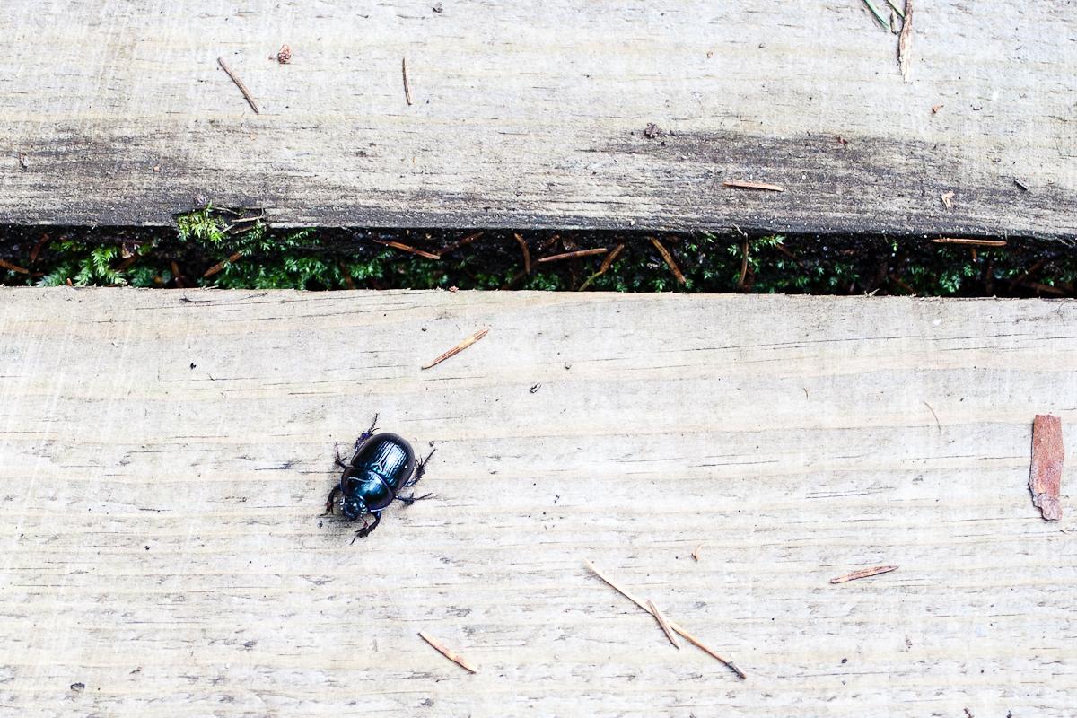 Bug'S Life Via @Atisgailis
