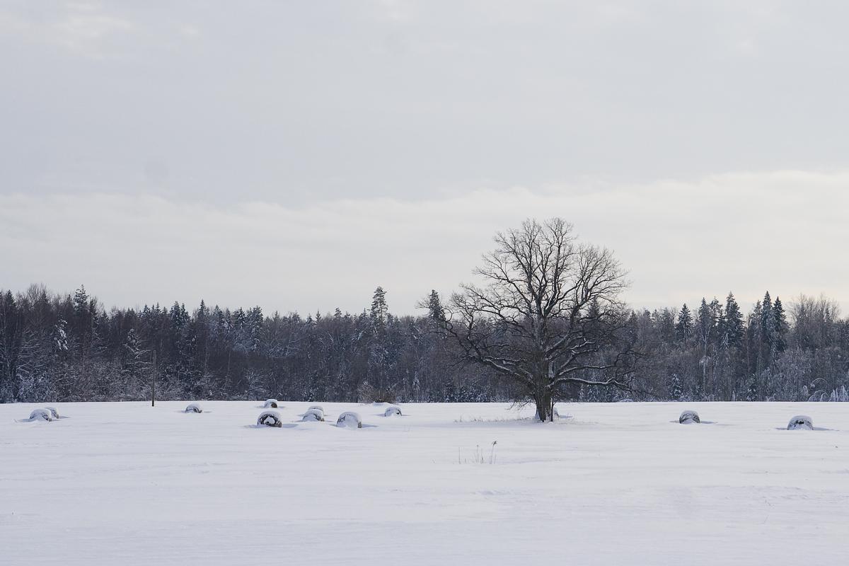 Field In Winter Via @Atisgailis