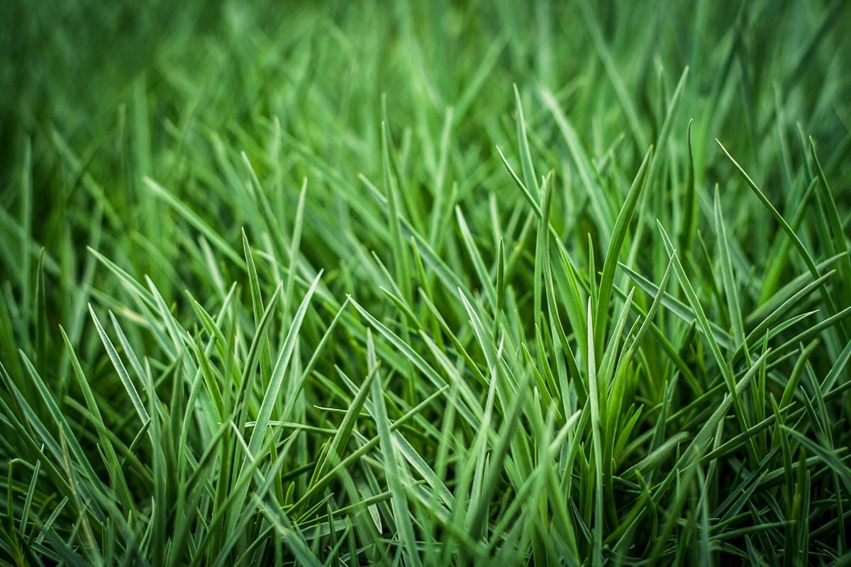 Green Grass Via @Atisgailis