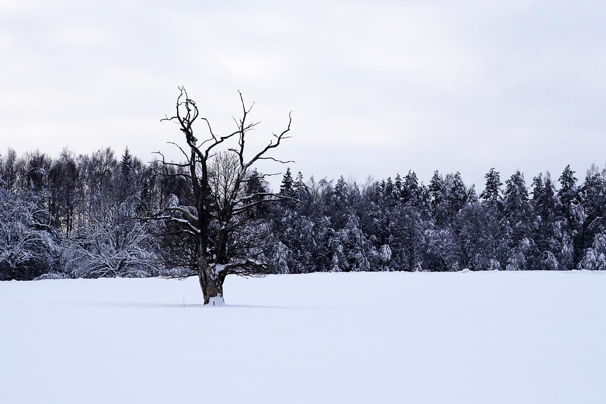 Lonely Tree Via @Atisgailis