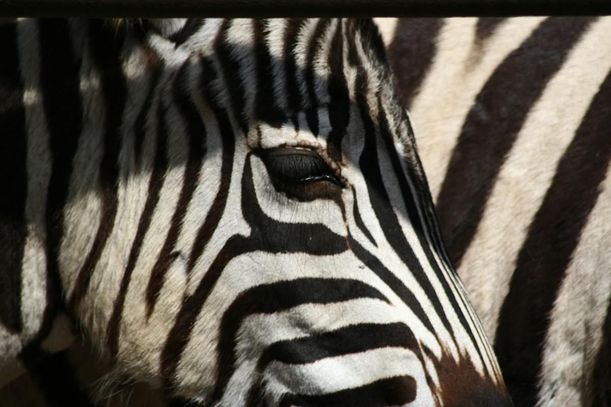 Riga Zoo Via @Atisgailis