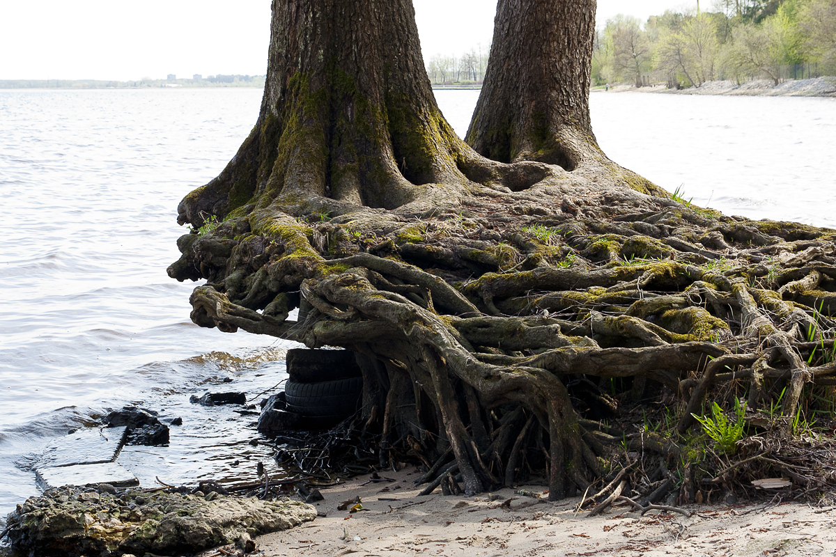 Roots Via @Atisgailis