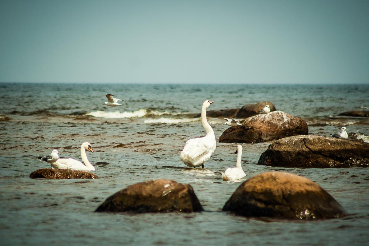 Seabirds Via @Atisgailis