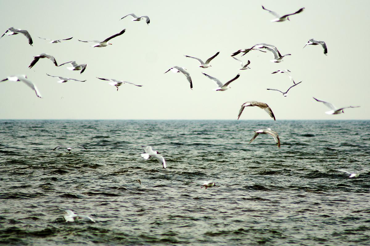 Sea And Seagulls Via @Atisgailis