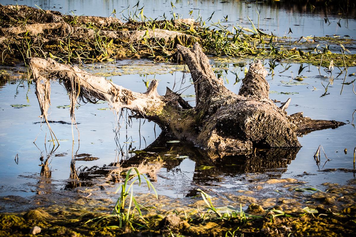 Stump In Water Via @Atisgailis