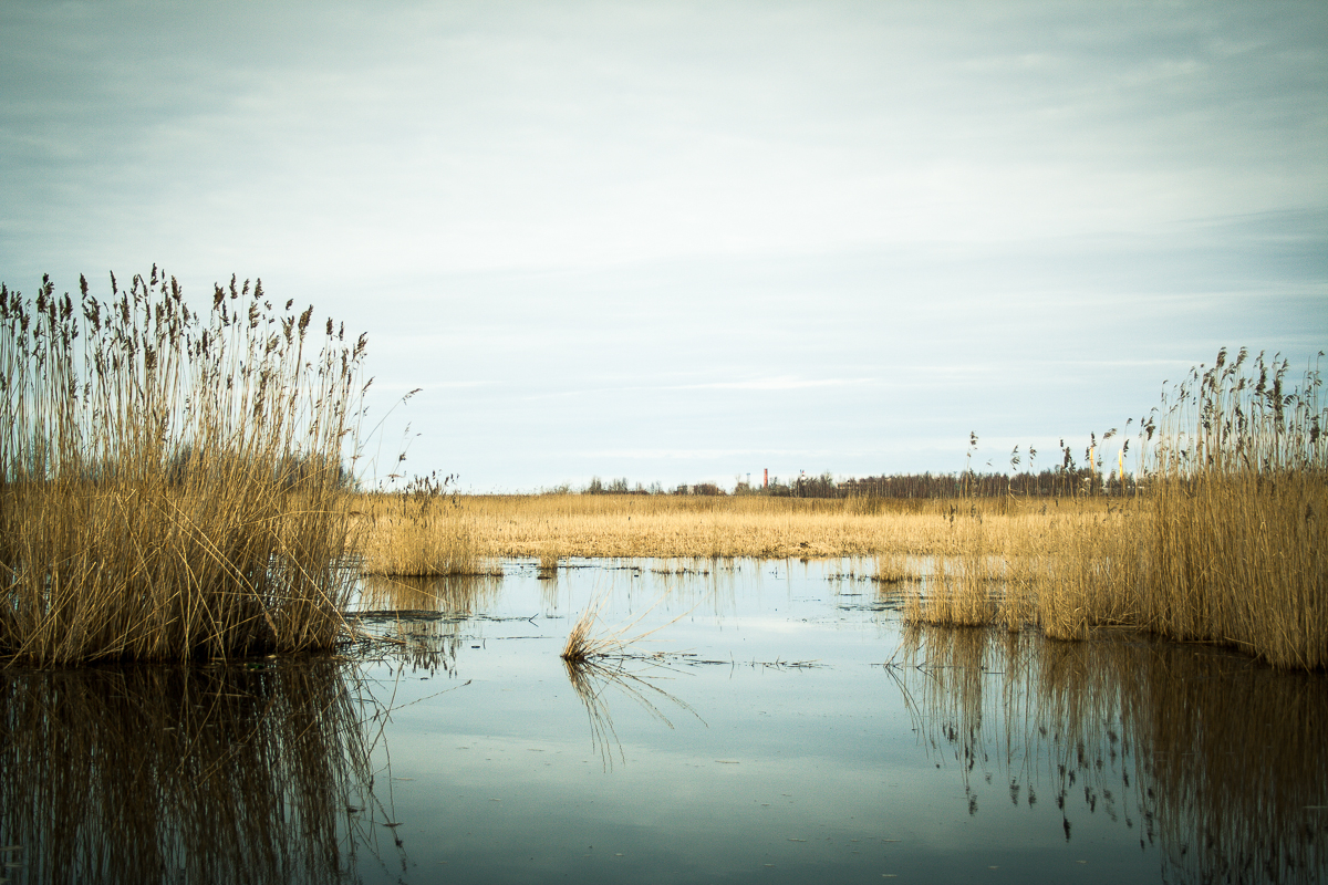 Swamp Via @Atisgailis