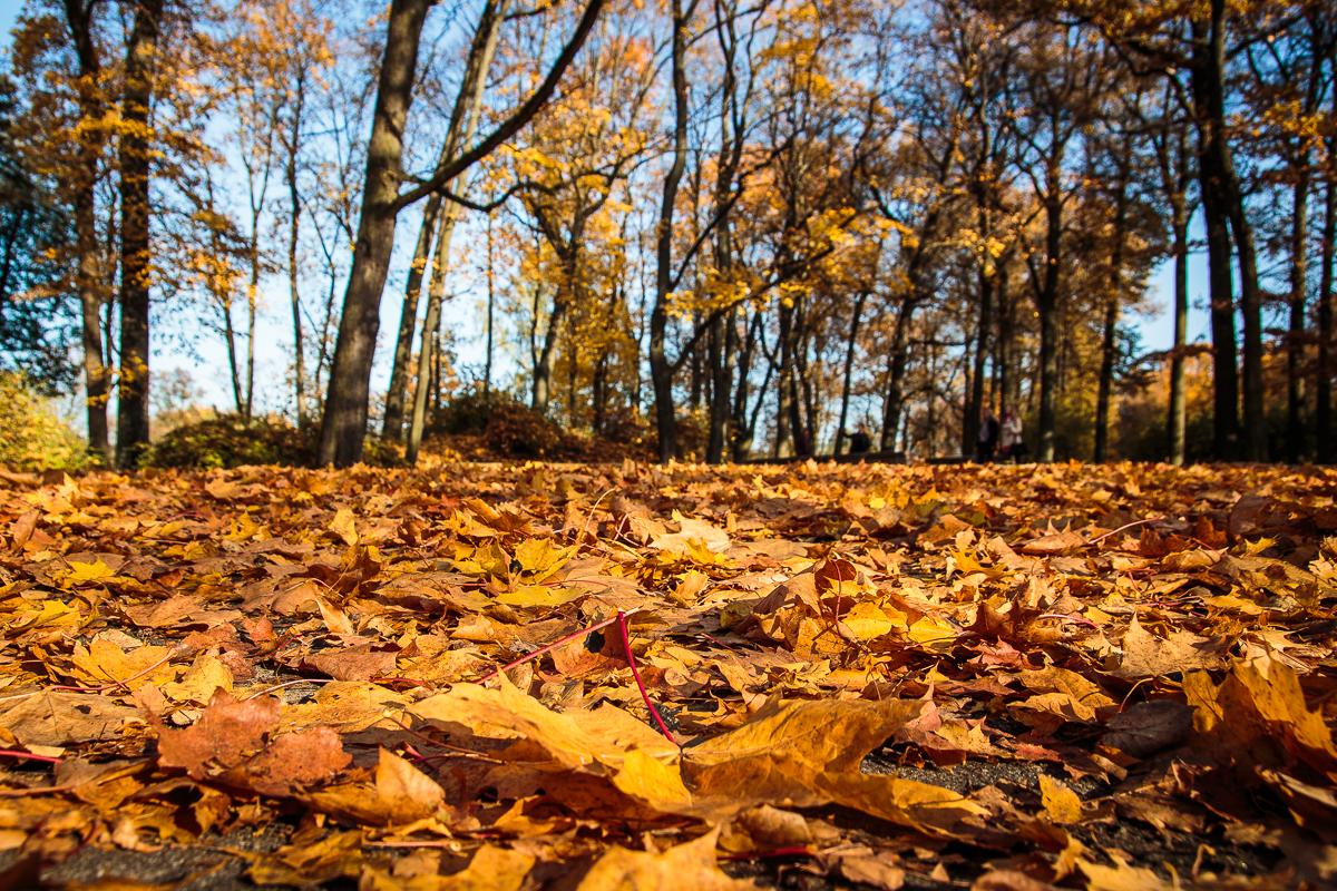 Yellow Leaves Via @Atisgailis