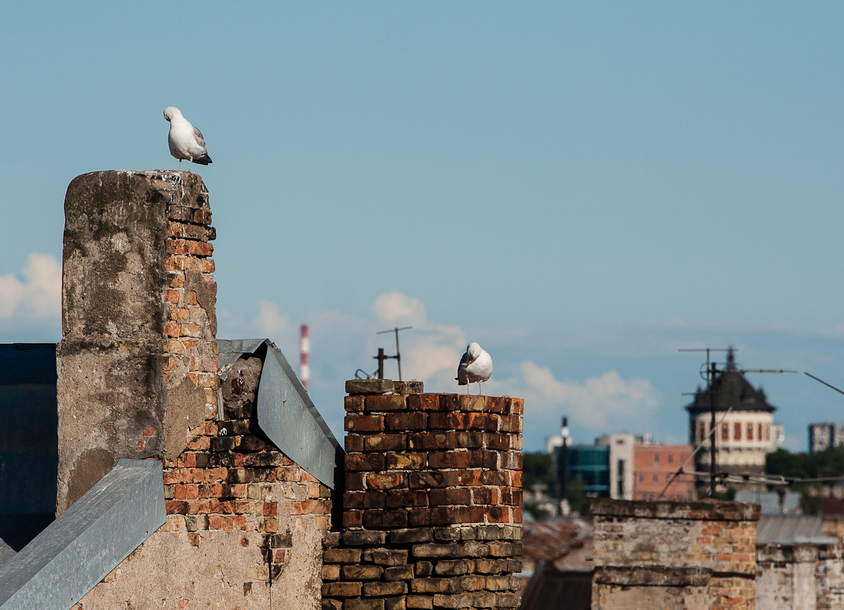 Gulls On Chimneys Via @Atisgailis