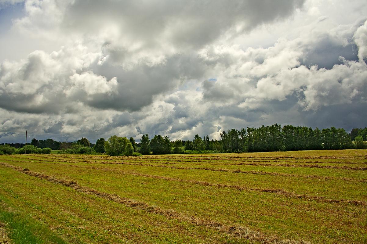 Summer At Countryside Via @Atisgailis