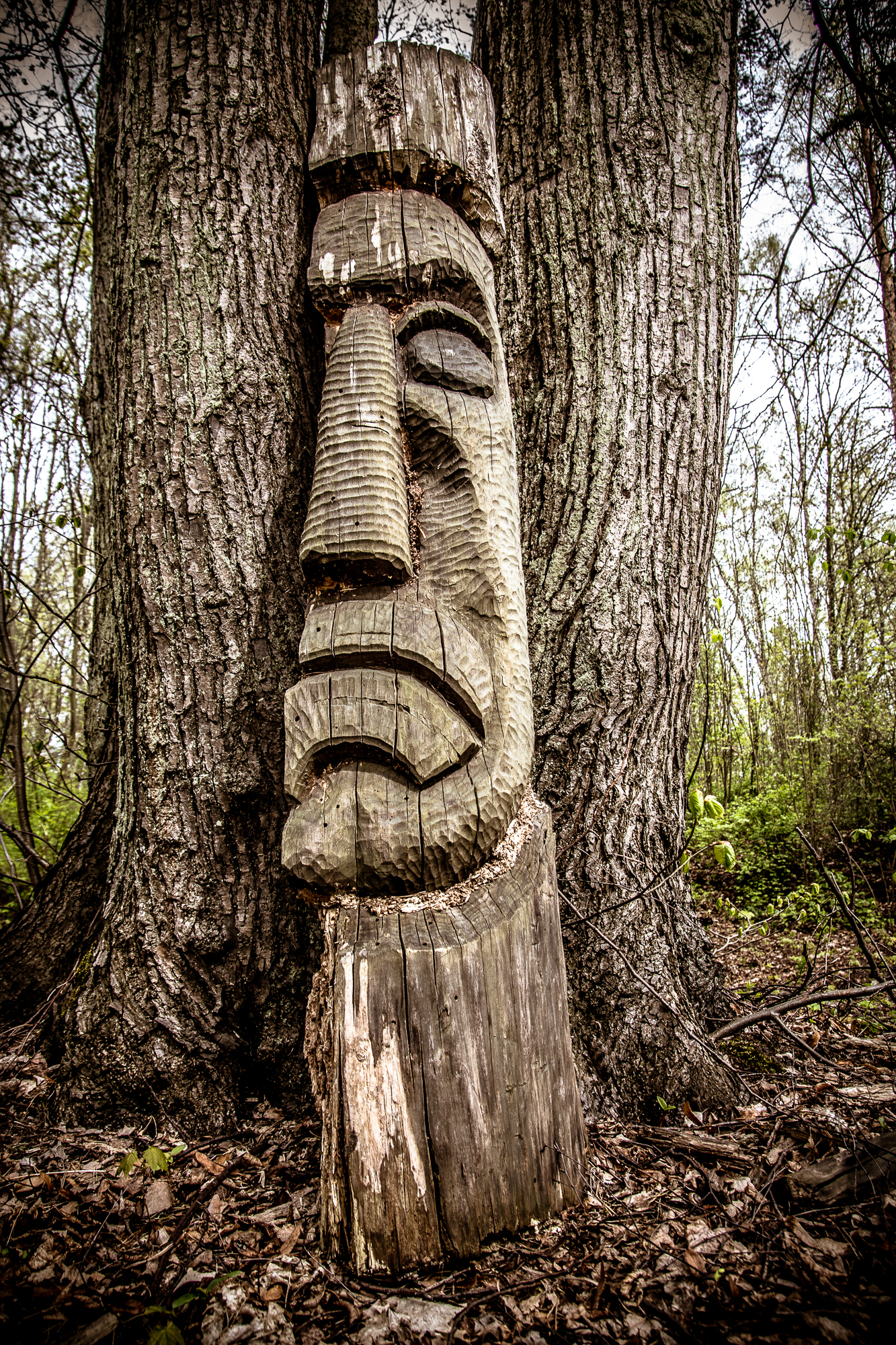Tree-Man Via @Atisgailis