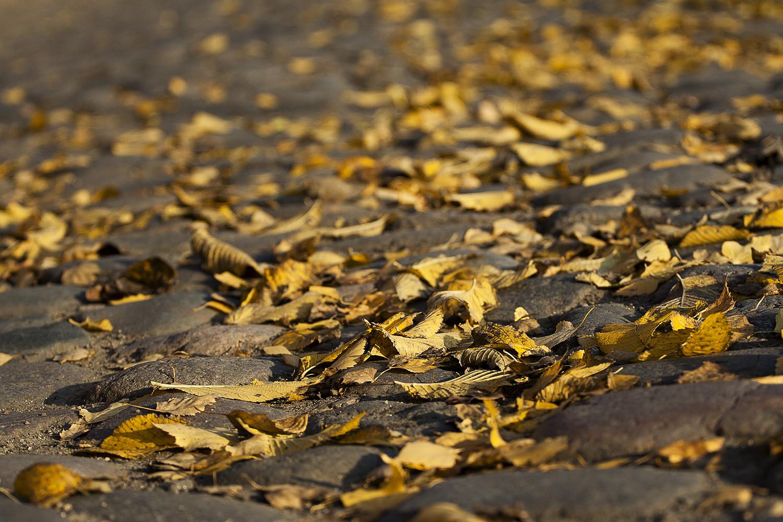 Yellow Leaves On The Pavement Via @Atisgailis