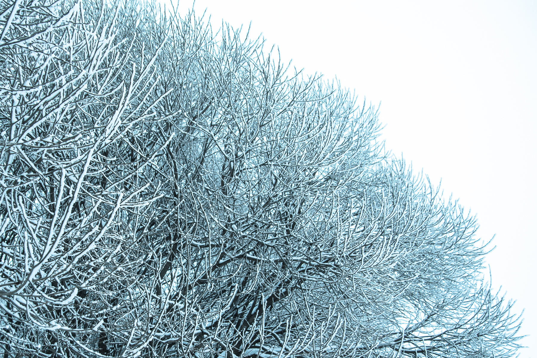 Branches With Frost Via @Atisgailis