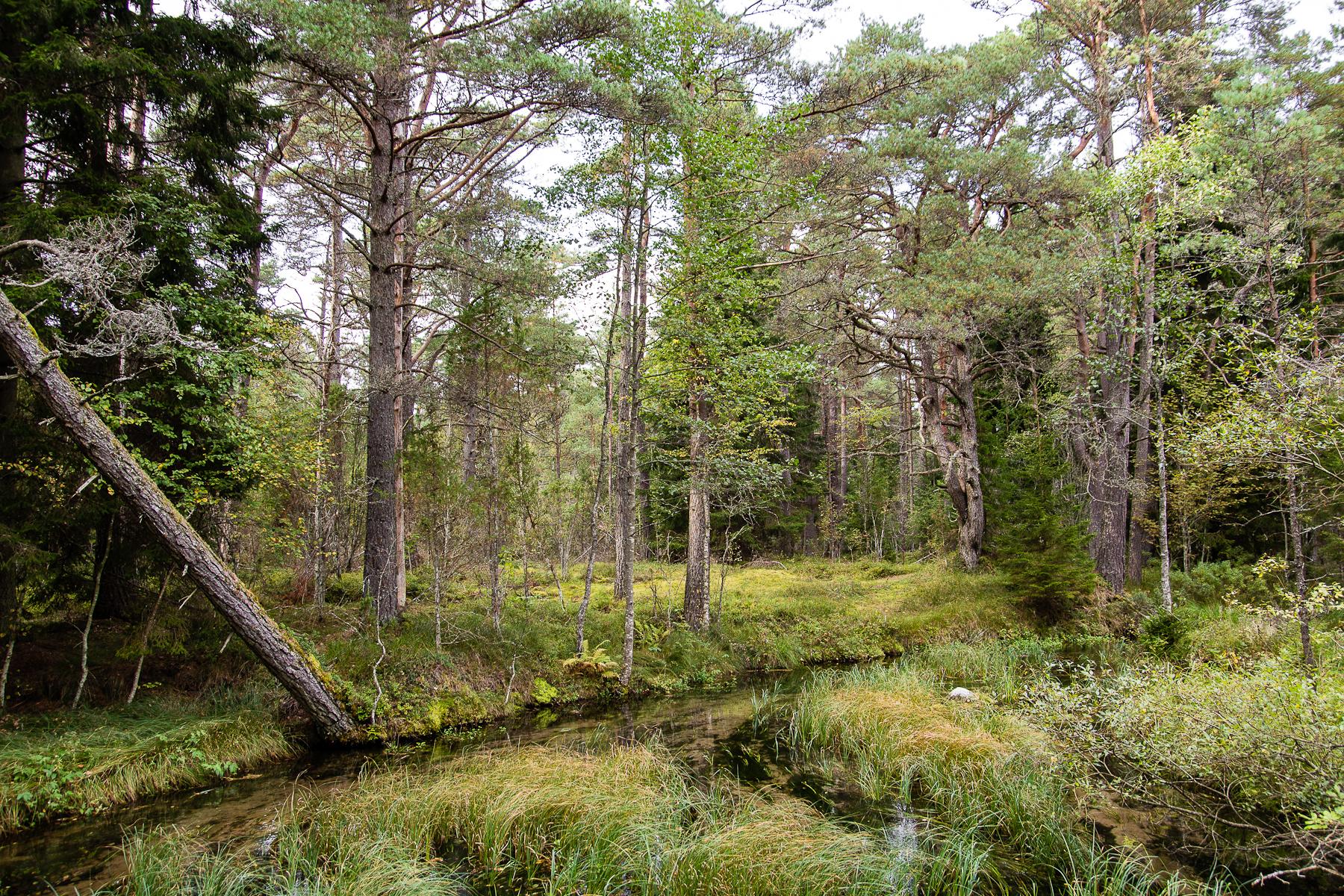Forest Stream Via @Atisgailis