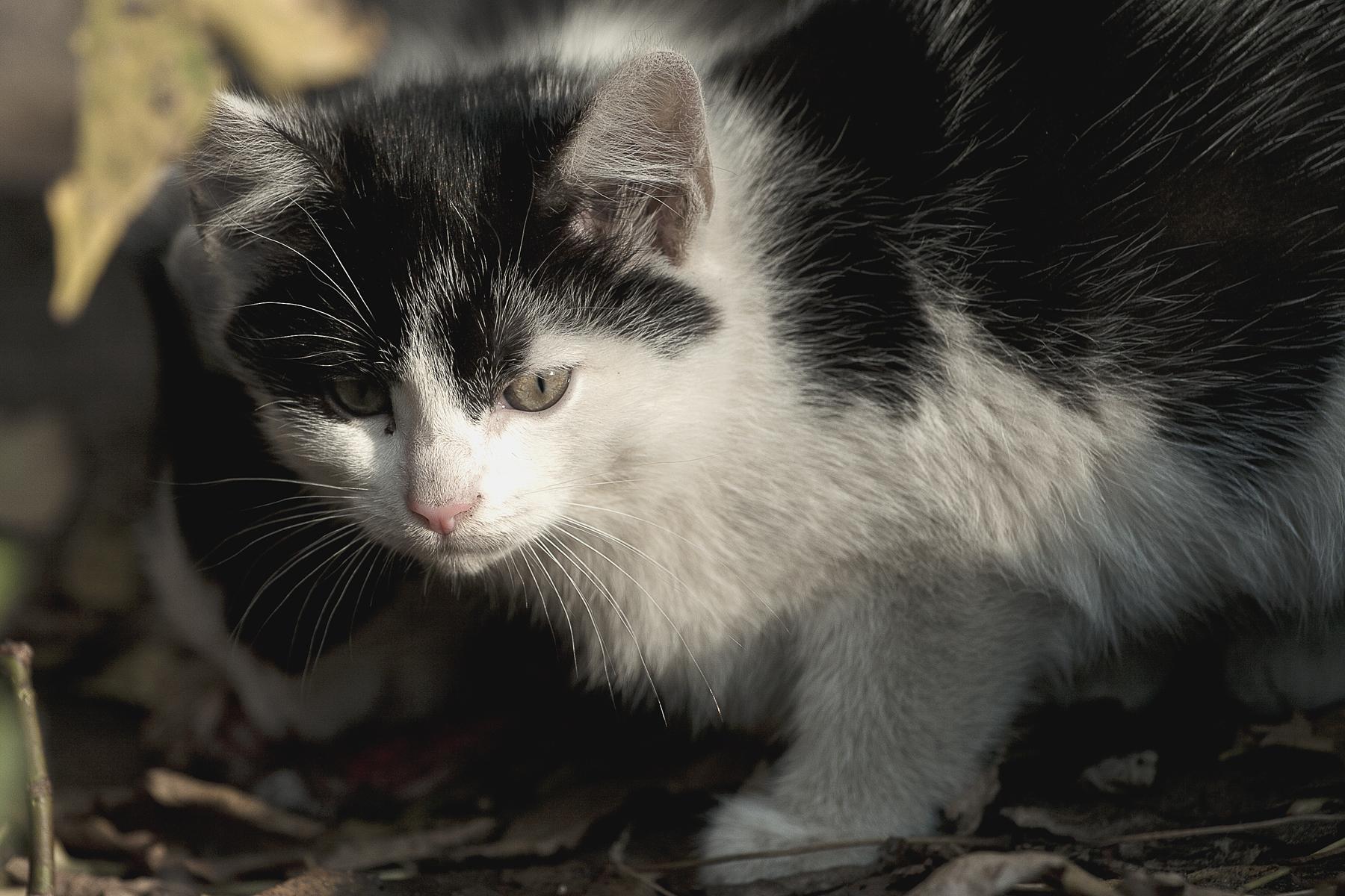 Kitten Via @Atisgailis