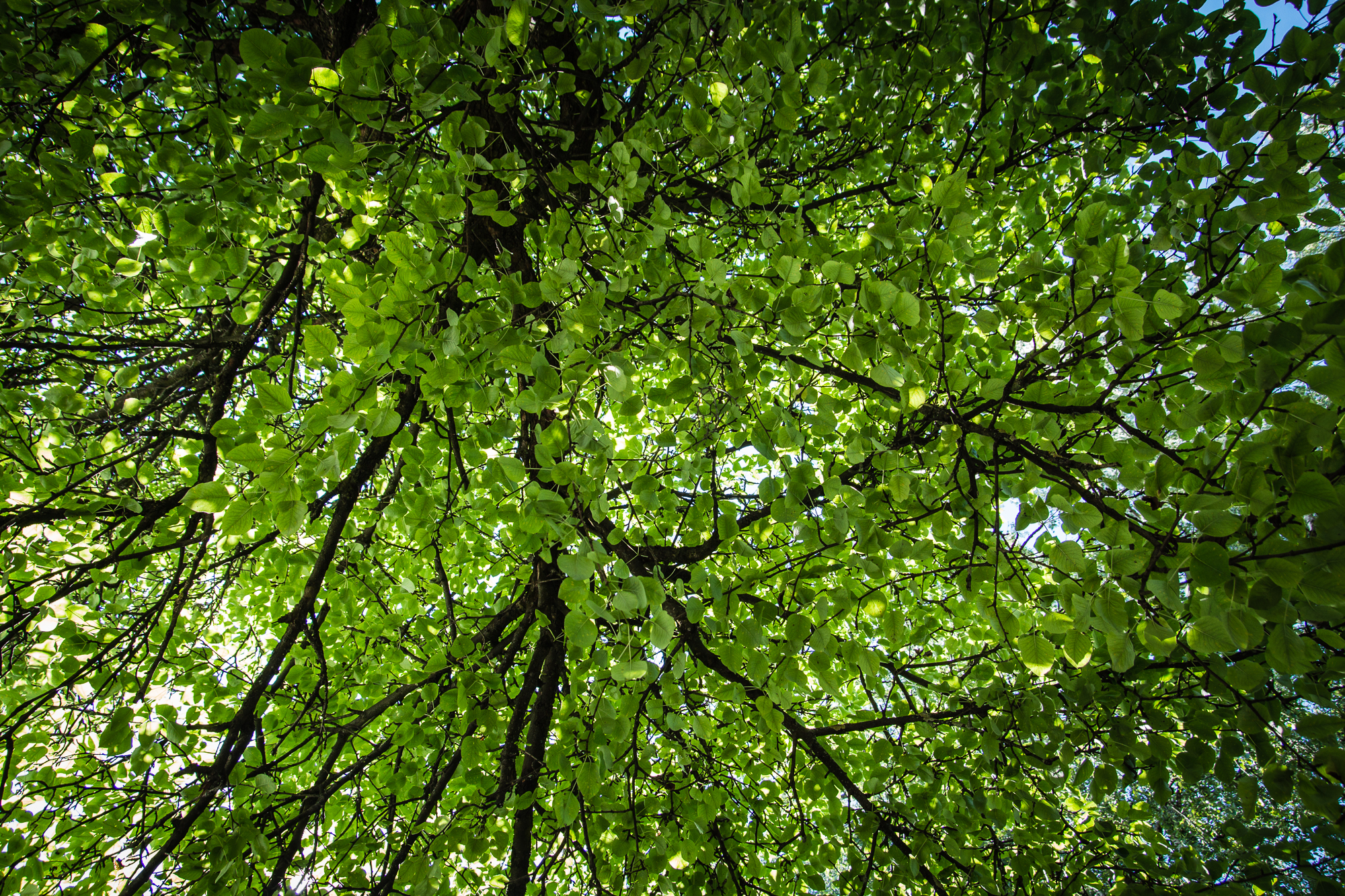 Green Leaves Via @Atisgailis