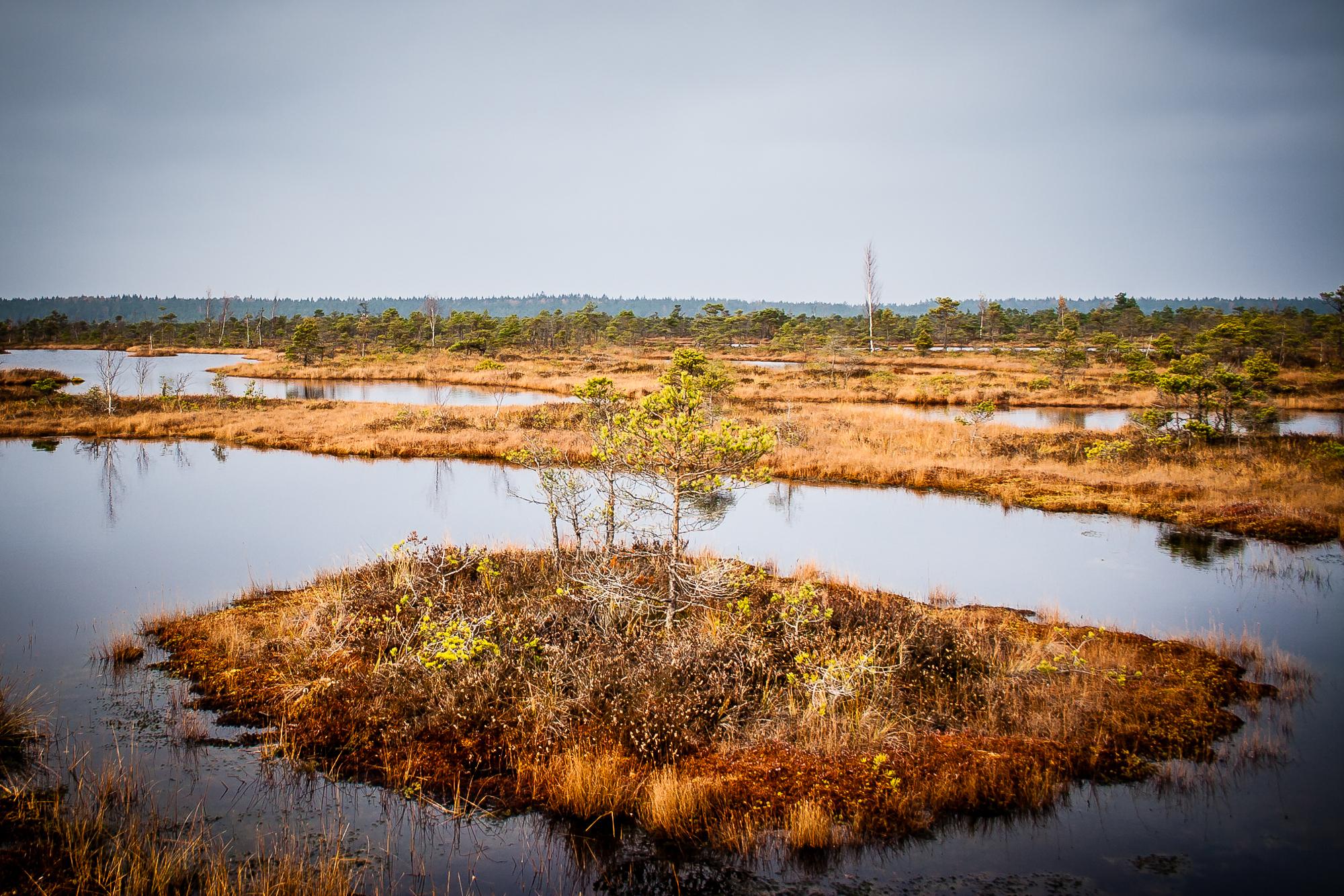 Island In Swamp Via @Atisgailis
