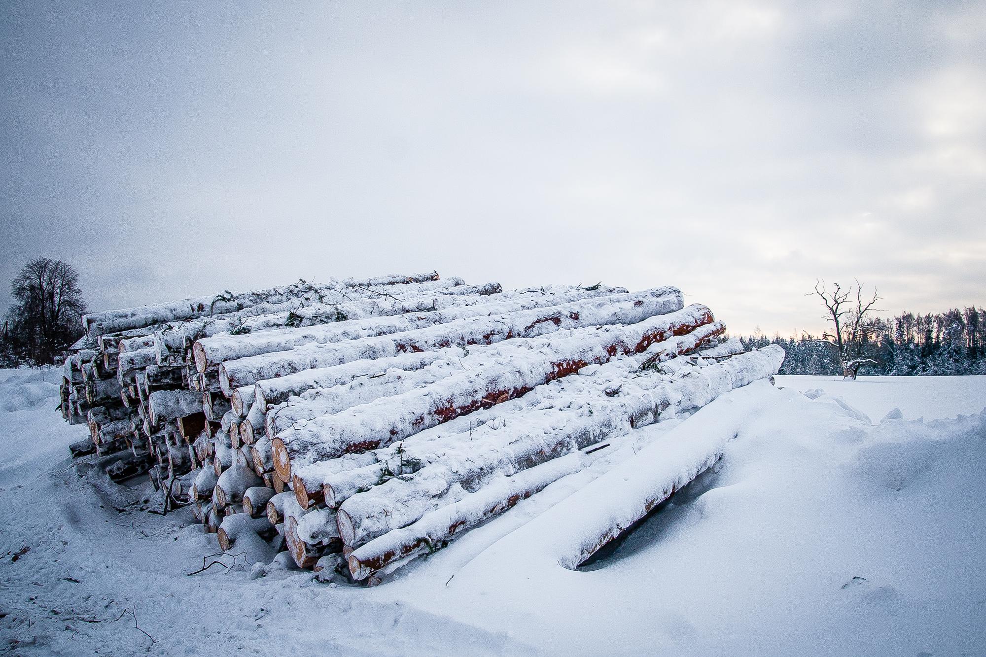 Timber Via @Atisgailis