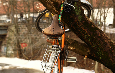 Bicycle on tree