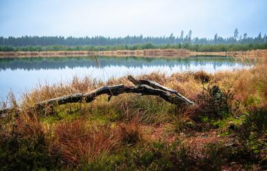 Broken Tree In Swamp