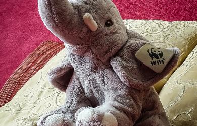 Elephant On Sofa