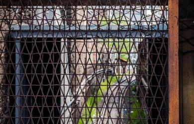 Fenced Railway