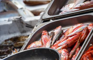 The Catania Fish Market