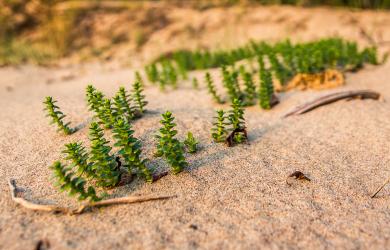 In dunes