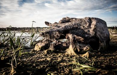 In swamp