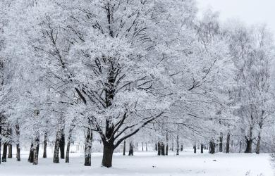 park- in winter