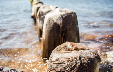 Wooden piles in sea