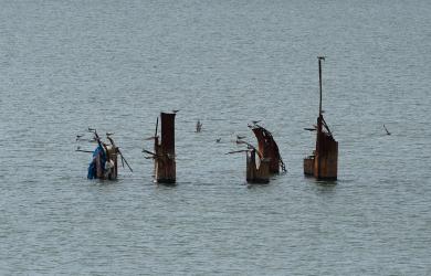 Ship For Seagulls