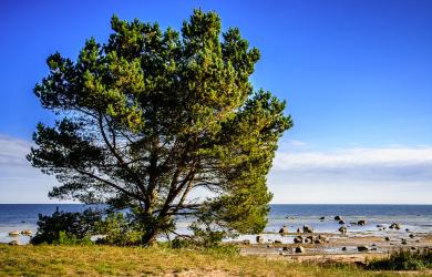 Tree at seaside