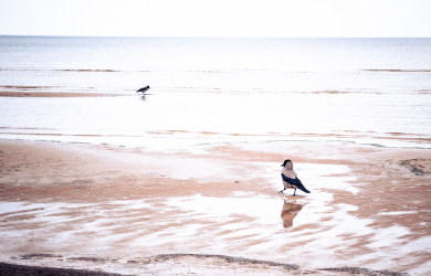 Two crows in the sea