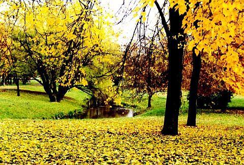 Autumn Via @Atisgailis