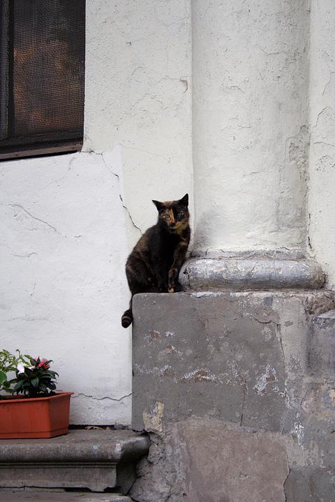 Cat On Podium Via @Atisgailis