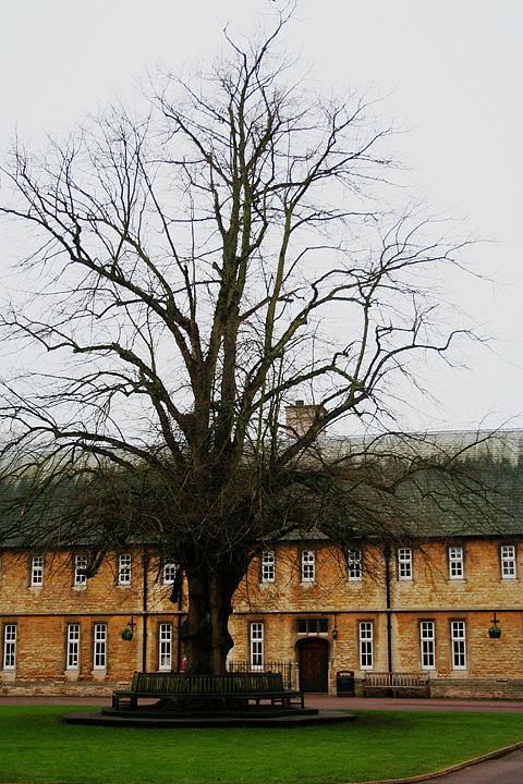 The Old Tree Via @Atisgailis