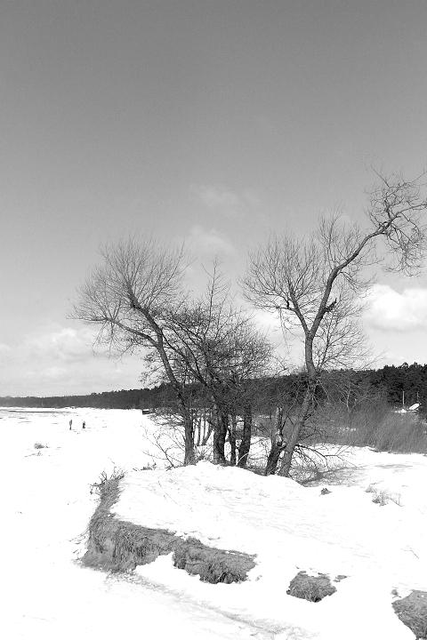 Trees In Winter Via @Atisgailis