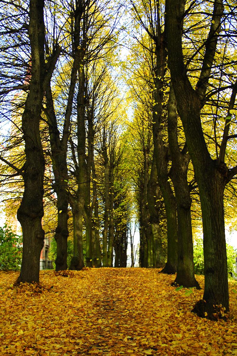 Autumn Alley Via @Atisgailis