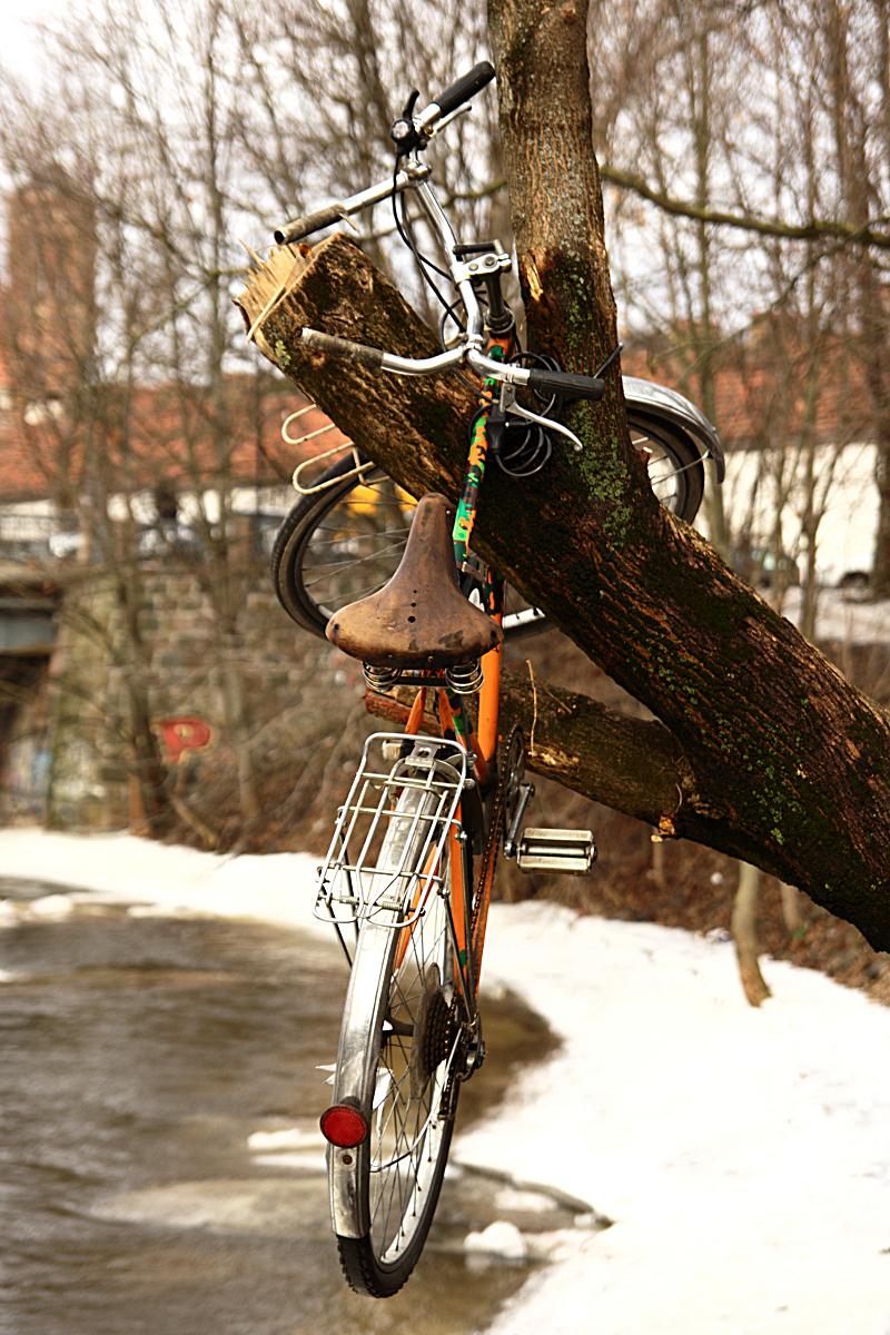 Bicycle On Tree Via @Atisgailis