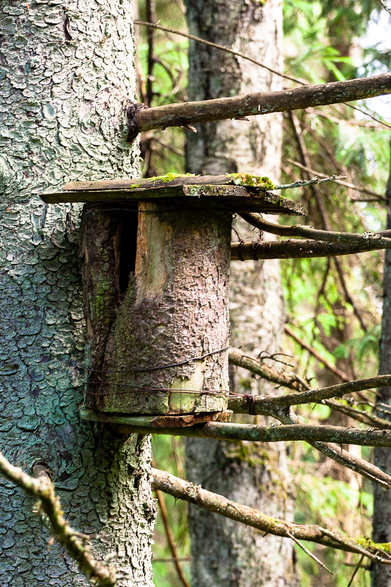 Wooden Bird Cage Via @Atisgailis