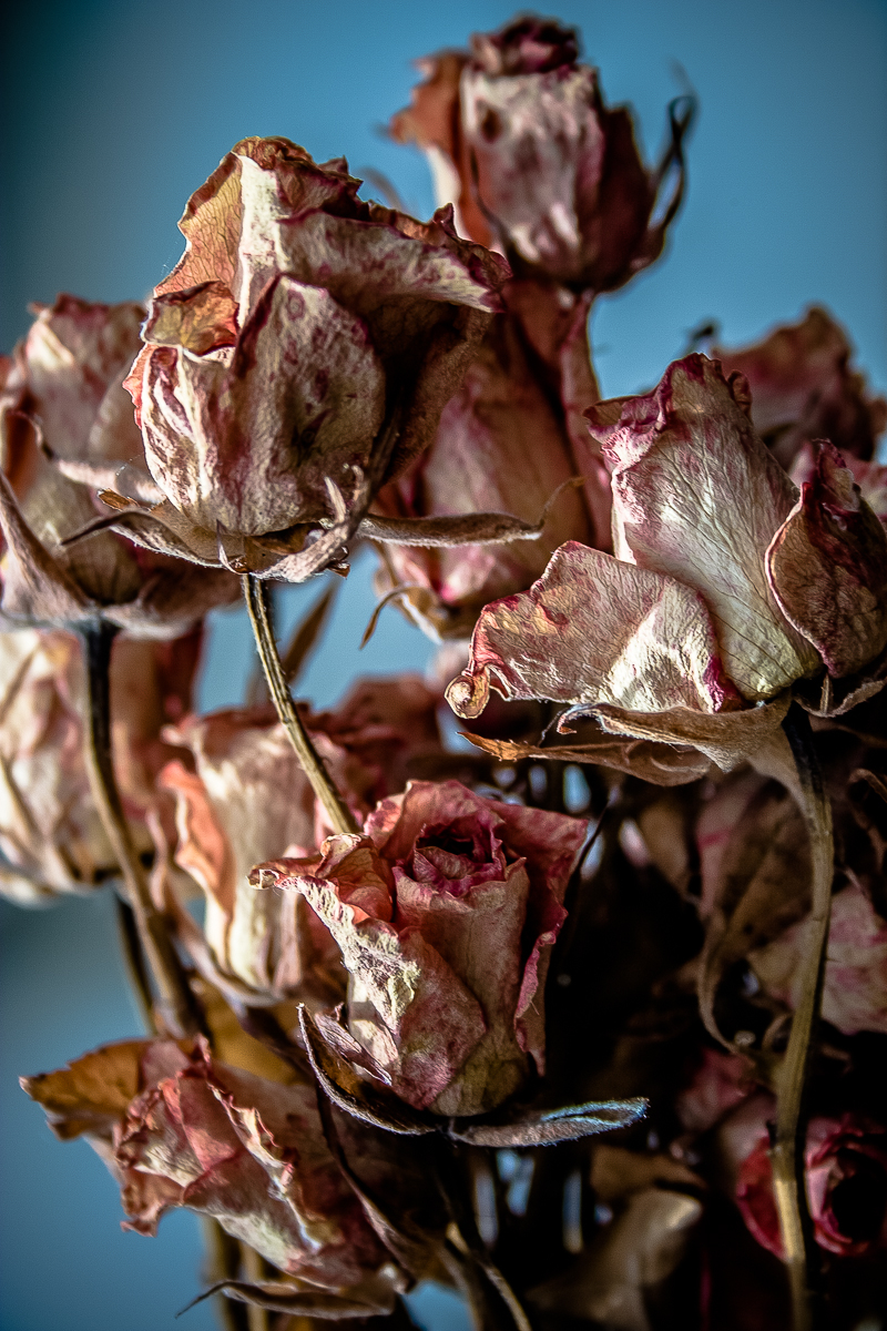 Dead Roses Via @Atisgailis