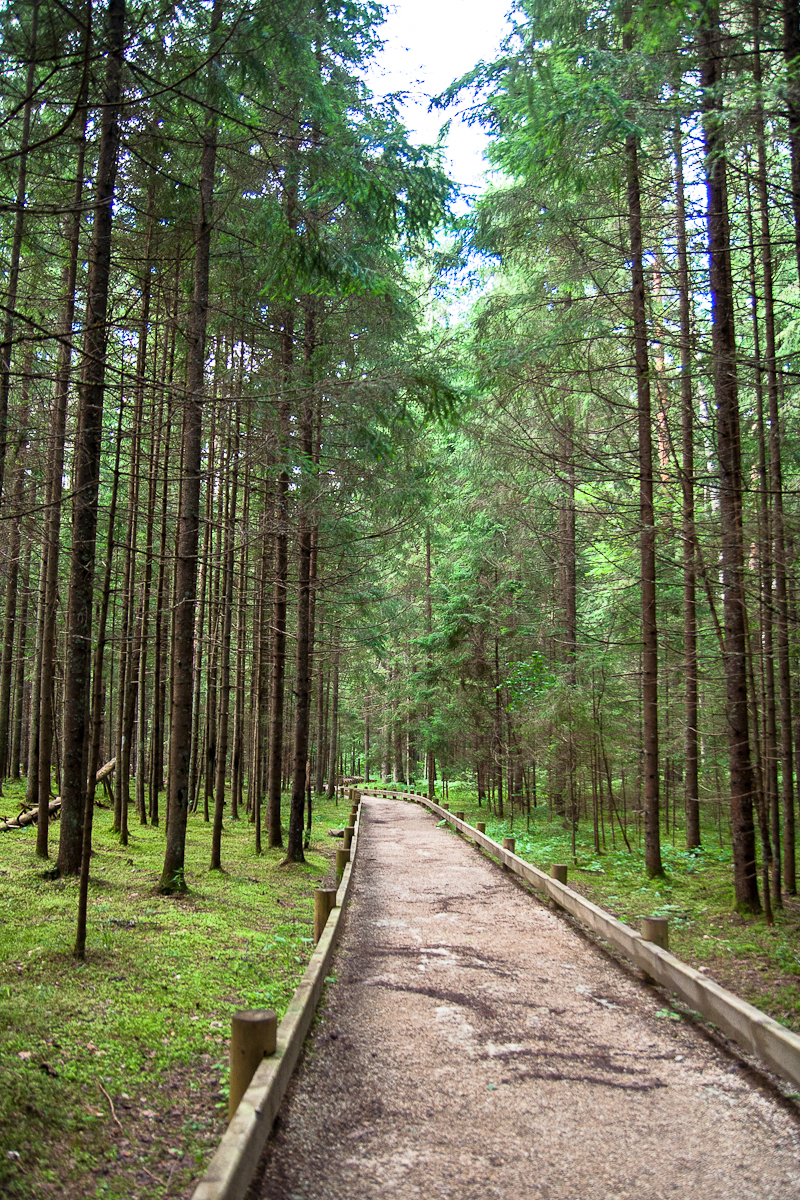 Forest Trail Via @Atisgailis