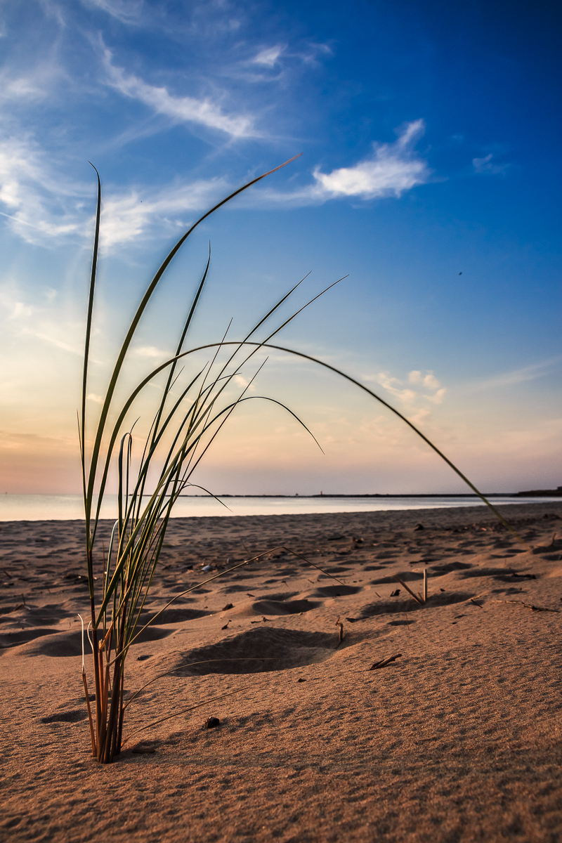 Grass On Beach Via @Atisgailis