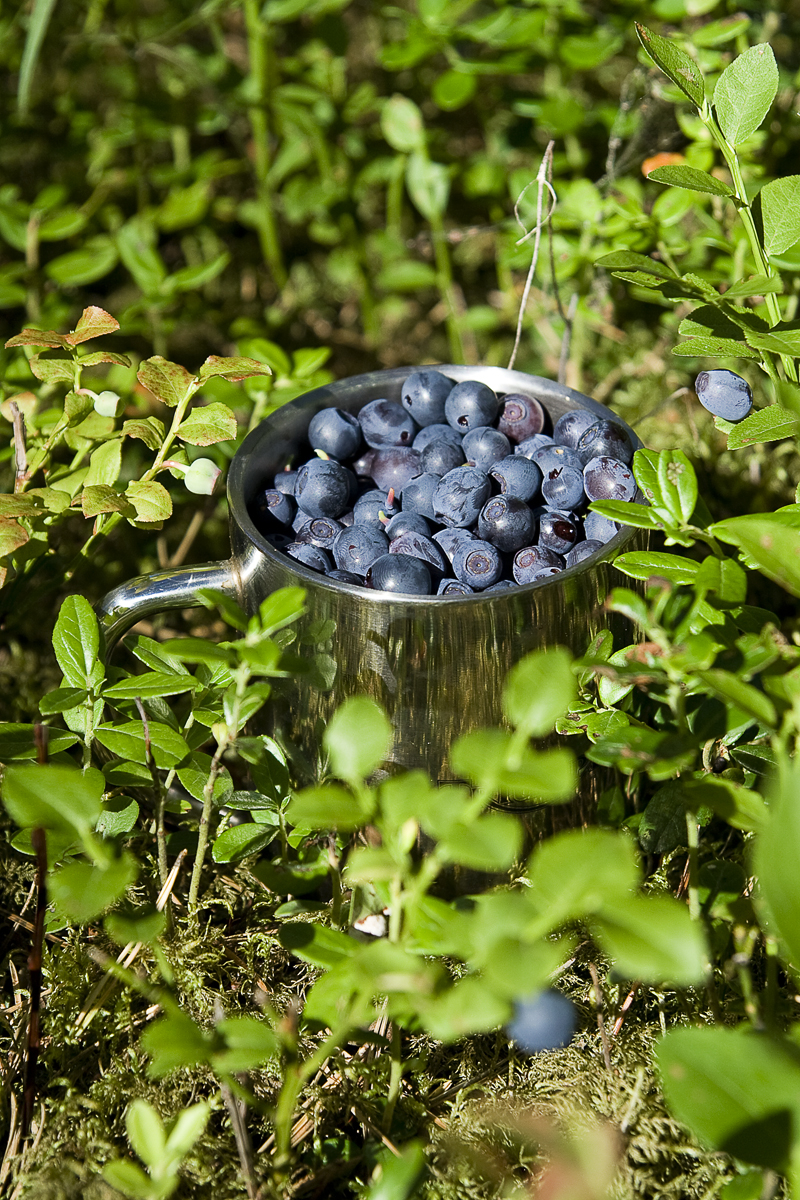 Mug Of Bilberries Via @Atisgailis