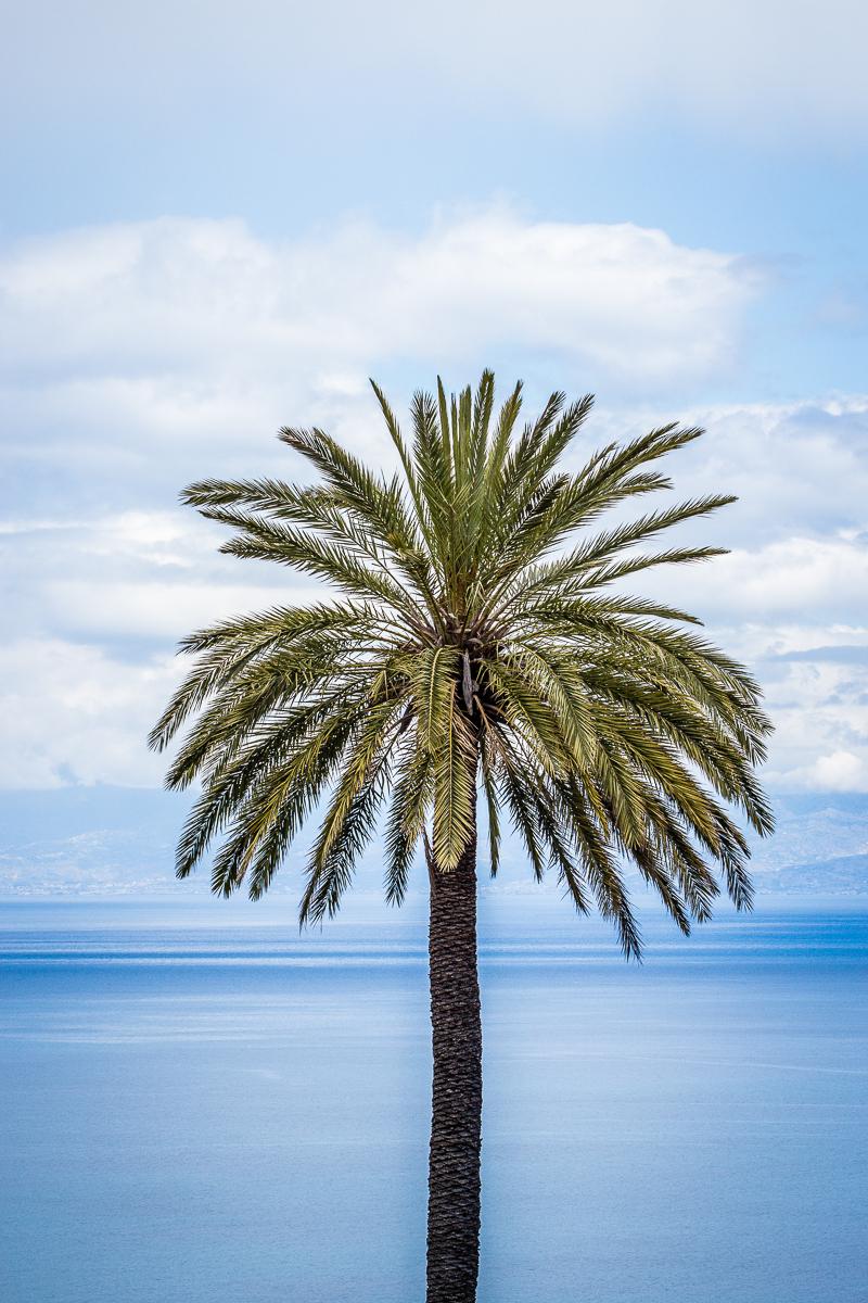 Palm Via @Atisgailis